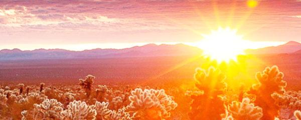 File Photo of Sunrise at Joshua Tree National Park