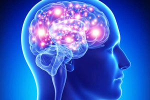 File Image of Stylized Artist's Rendition of Head and Brain